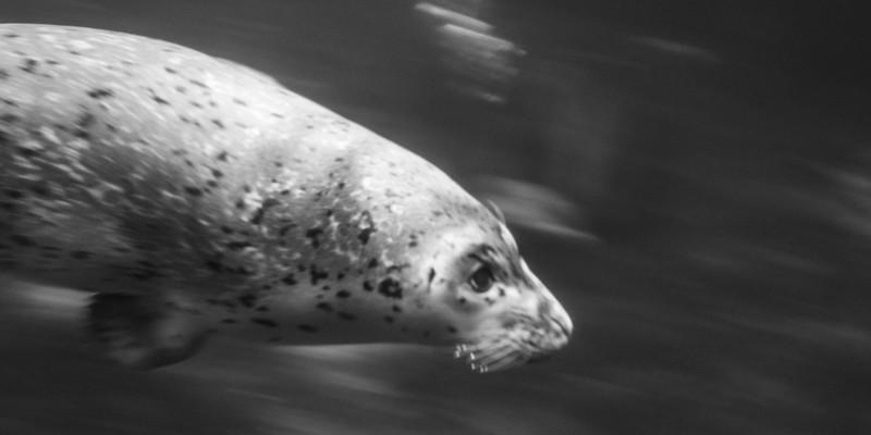 Torpedo Seal