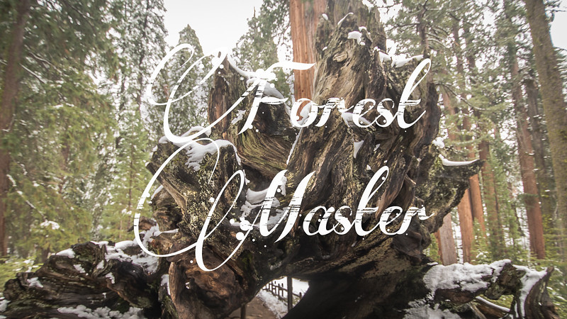 Forest Master Slideshow With Music