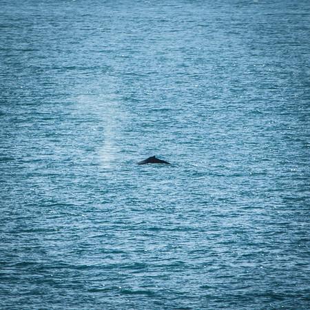Whale Mist