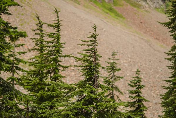 Pine Cascades