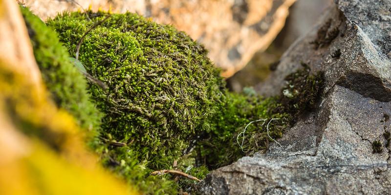 Moss Sponge