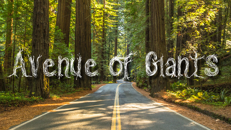 Avenue of Giants Slideshow with Music