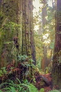 Sun Forest