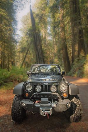 Redwood Warrior