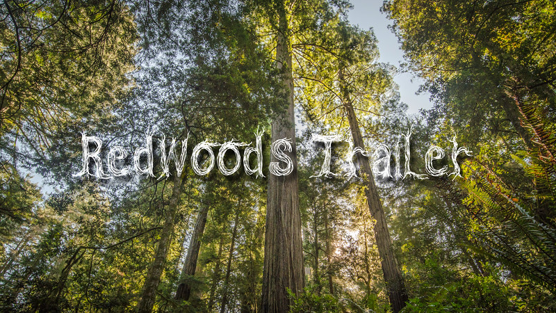 Redwoods Trailer