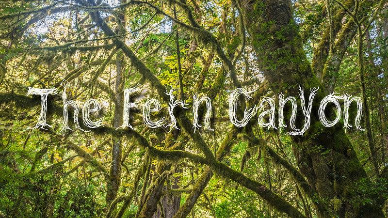 The Fern Canyon Slideshow with Music