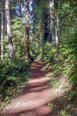 Path Onward