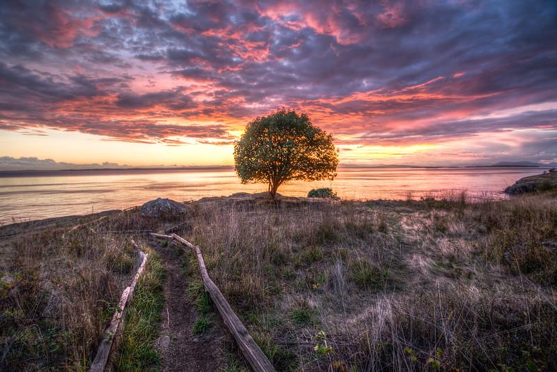 Oil Tree