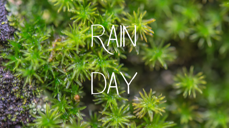 Rain Day Slideshow with Music