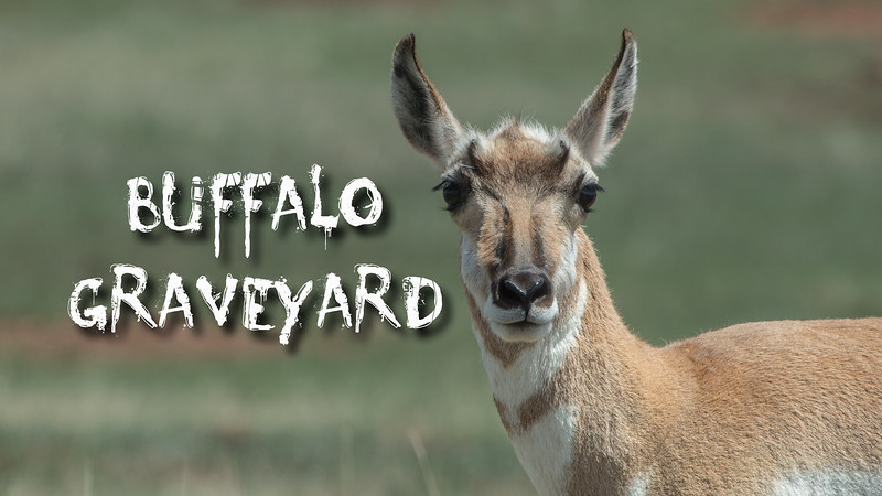 Buffalo Graveyard Slideshow with Music