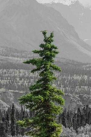 Alaskan Spire