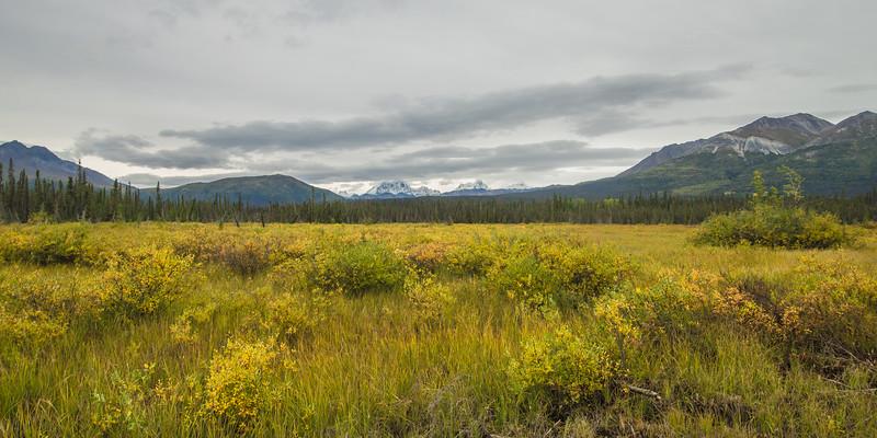 Golden Alaska