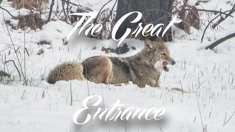 The Great Entrance Slideshow with Music