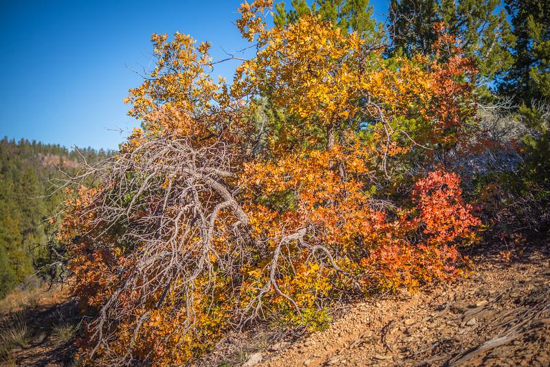 Fall's Flourish