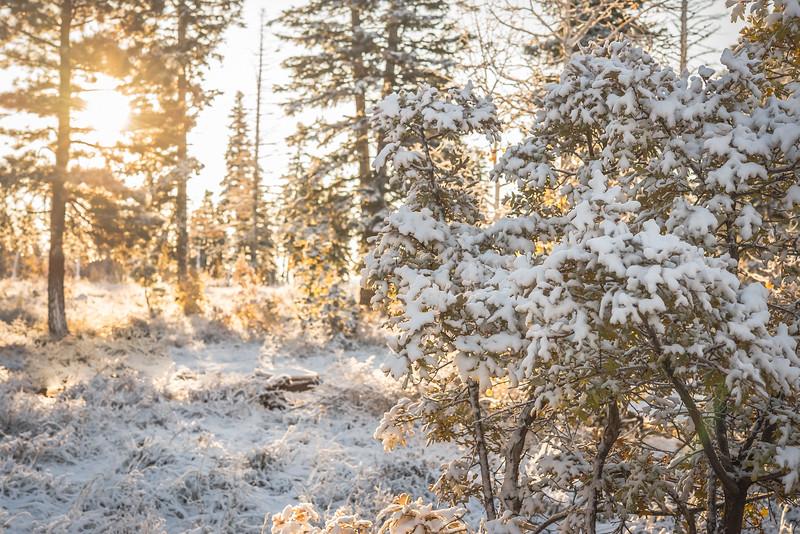 Snow Stun
