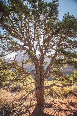 Tree Webs