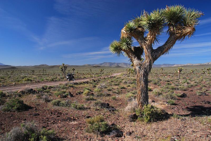 Saline Valley, SW from Death Valley,  CA