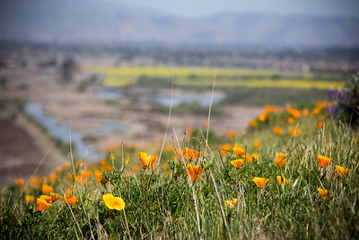 3-20-14 Coyote Hills Photography