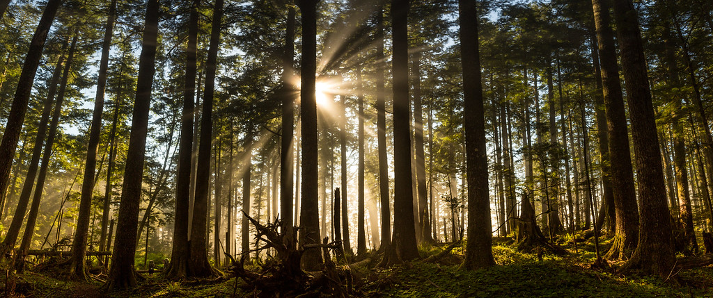 Oregon Coast Trail