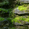 Close up of moss growing on a stone wall