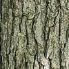 Wood bark texture close up