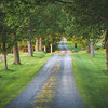 Early morning sunlight on a tree lined driveway in the country