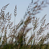 Late morning light in a wetland with tall grasses and water