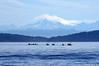 4180 Sea Kayaks and Mt Baker
