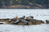 4213 Seals on rocks