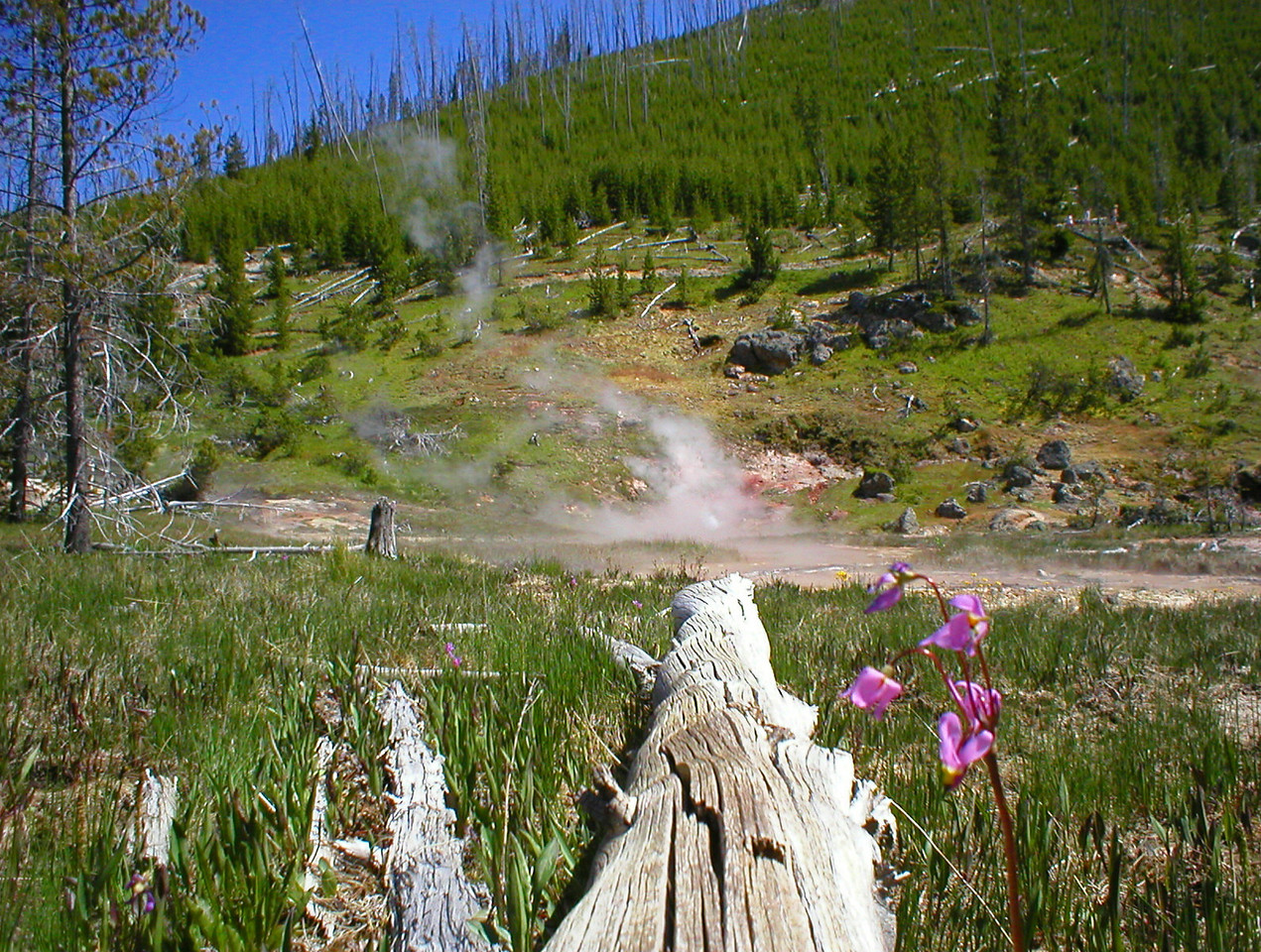 Geysers are everywhere. I imagine what ancient people must have thought the first time coming on to this place.