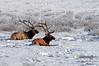 1920 National Elk Refuge