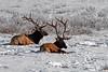 1924 National Elk Refuge