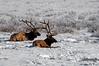 1922 National Elk Refuge