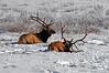 1928 National Elk Refuge