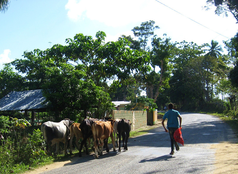 In the Dominican Republic, if you ride off the main freeway at all, you can expect to see cows or horses at any time.