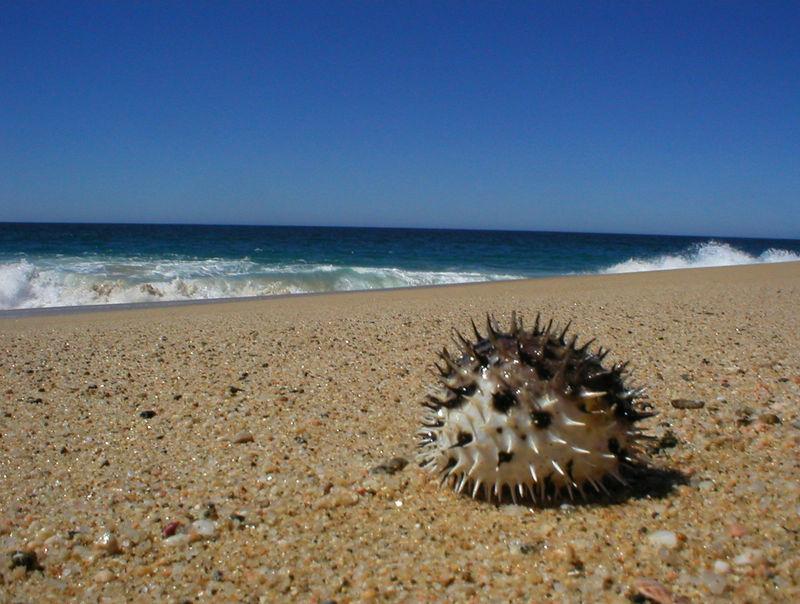 Beach walks: