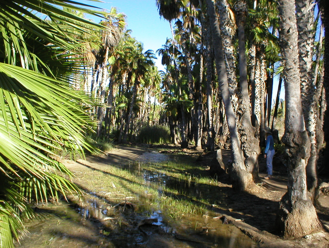 The last part of the road is driving across a small creek with big bumps after which you can park. The beach is about a 500 meter walk through an oasis type jungle.
