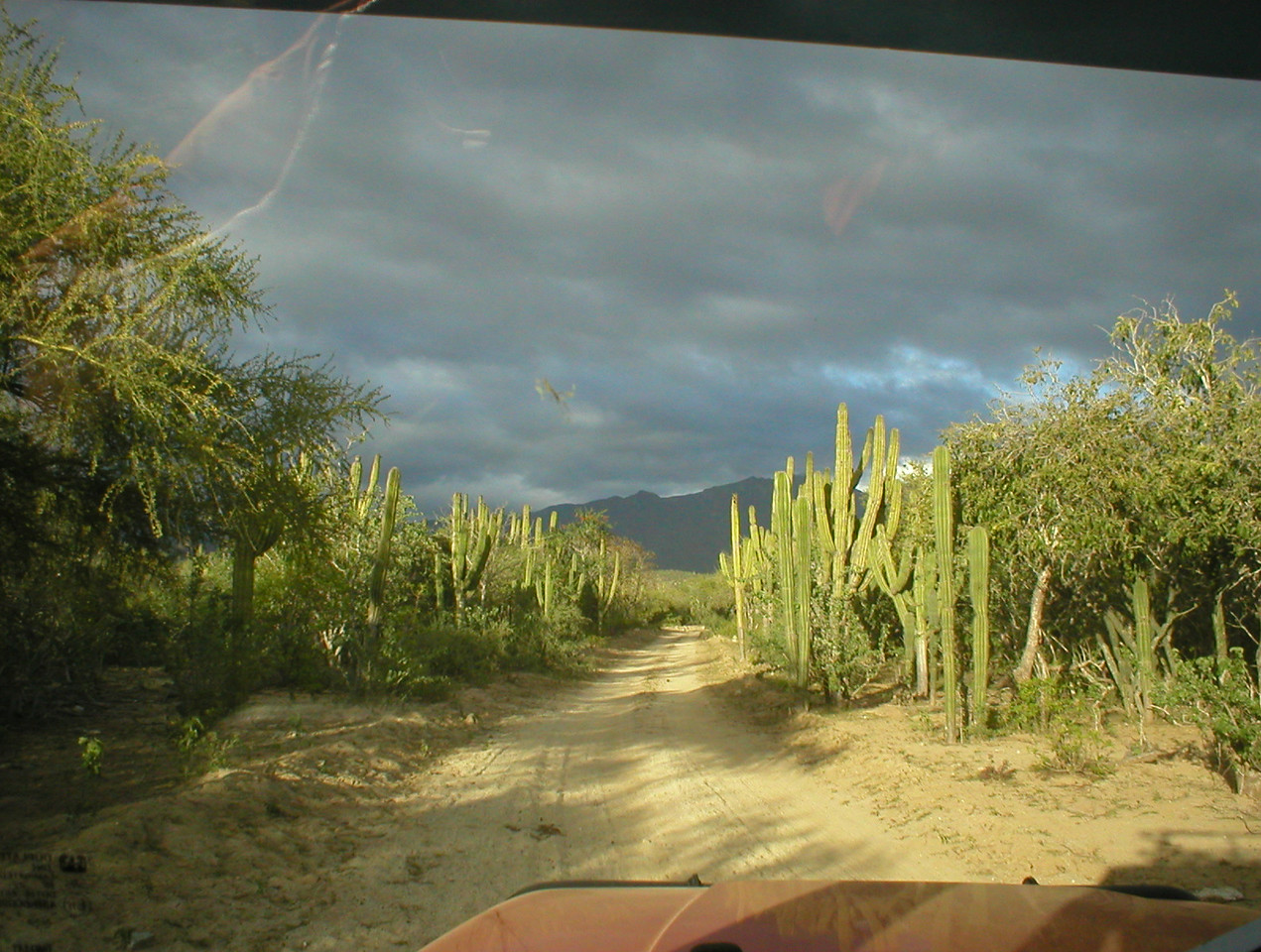 Going through the eco zones, cactus and trees.