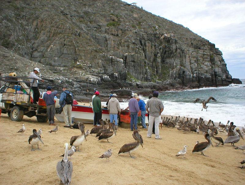 Punta Lobos fisherman: