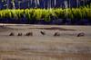 990 elk herd madison river valley