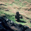 005 - 1987-07 - Easter Island