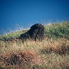 034 - 1987-07 - Easter Island