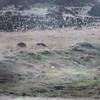 001 - 1987-07 - Easter Island