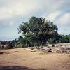 016 - 1992-03 (Mar) - Tonga