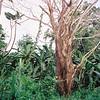 014 - Papua Nieu Guinea 2-11 Jan 1998