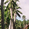 019 - Papua Nieu Guinea 2-11 Jan 1998