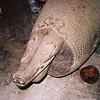 021 - Papua Nieu Guinea 2-11 Jan 1998