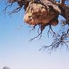 006 - 002 - Namibia 1-10 Oct 1998