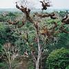 017 - 1999-05 Belize & Tikal Guatemala