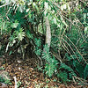 009 - 1999-05 Belize & Tikal Guatemala